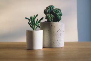 Dekorasyonunuza Renk Katacak Bakımı Kolay Bitkiler